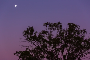 Outback moon